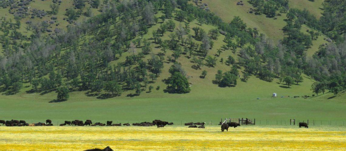 Bear Valley (6)
